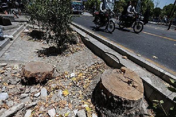 قطع کنندگان درخت در جاده های قزوین دستگیر شدند