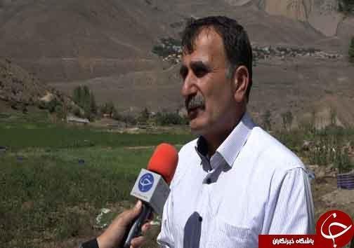 کشت سبزینه های تازه در دامان البرز