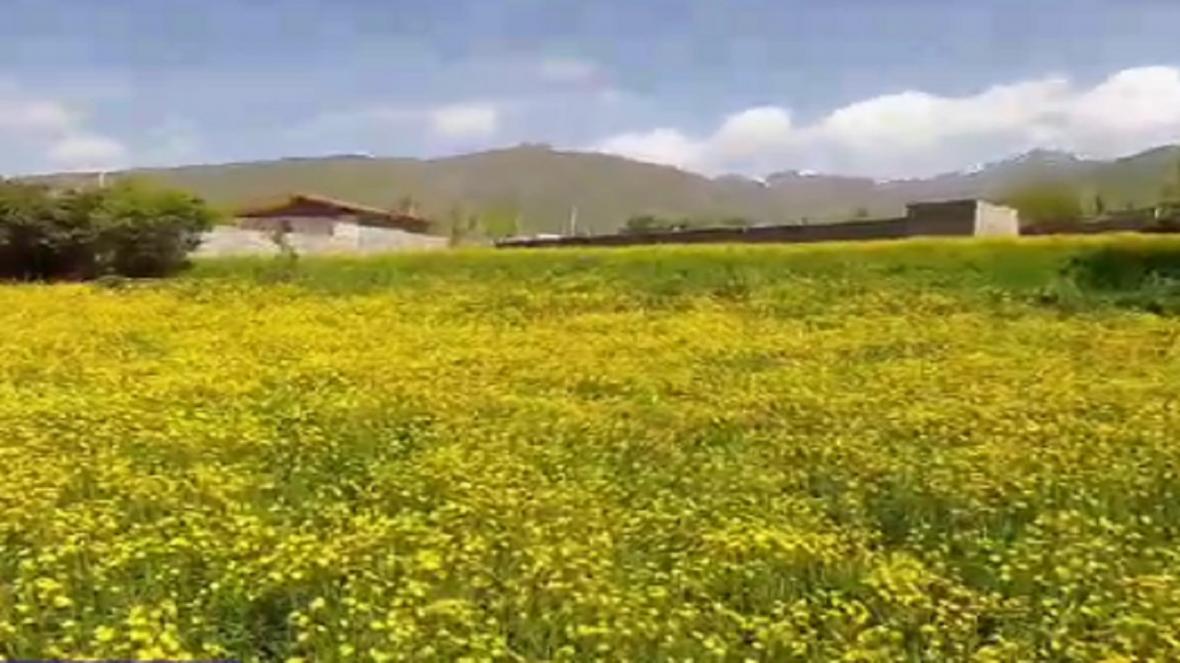 طبیعت جذاب و دیدنی در روستای حلمسی
