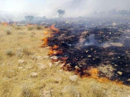 خبرنگاران 15هکتار از اراضی مراتع تنگ سدر دشتی درآتش سوخت
