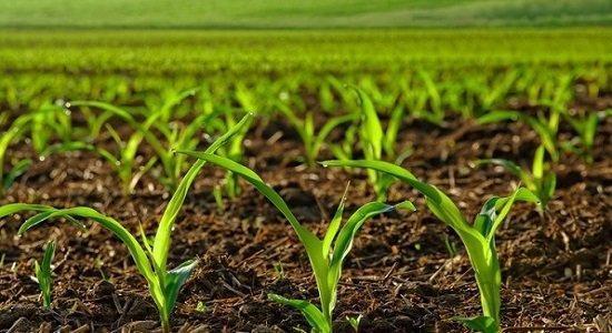 تاثیر نانومواد مهندسی شده در کشاورزی و زراعت ، کارایی کودها بهبود می یابد