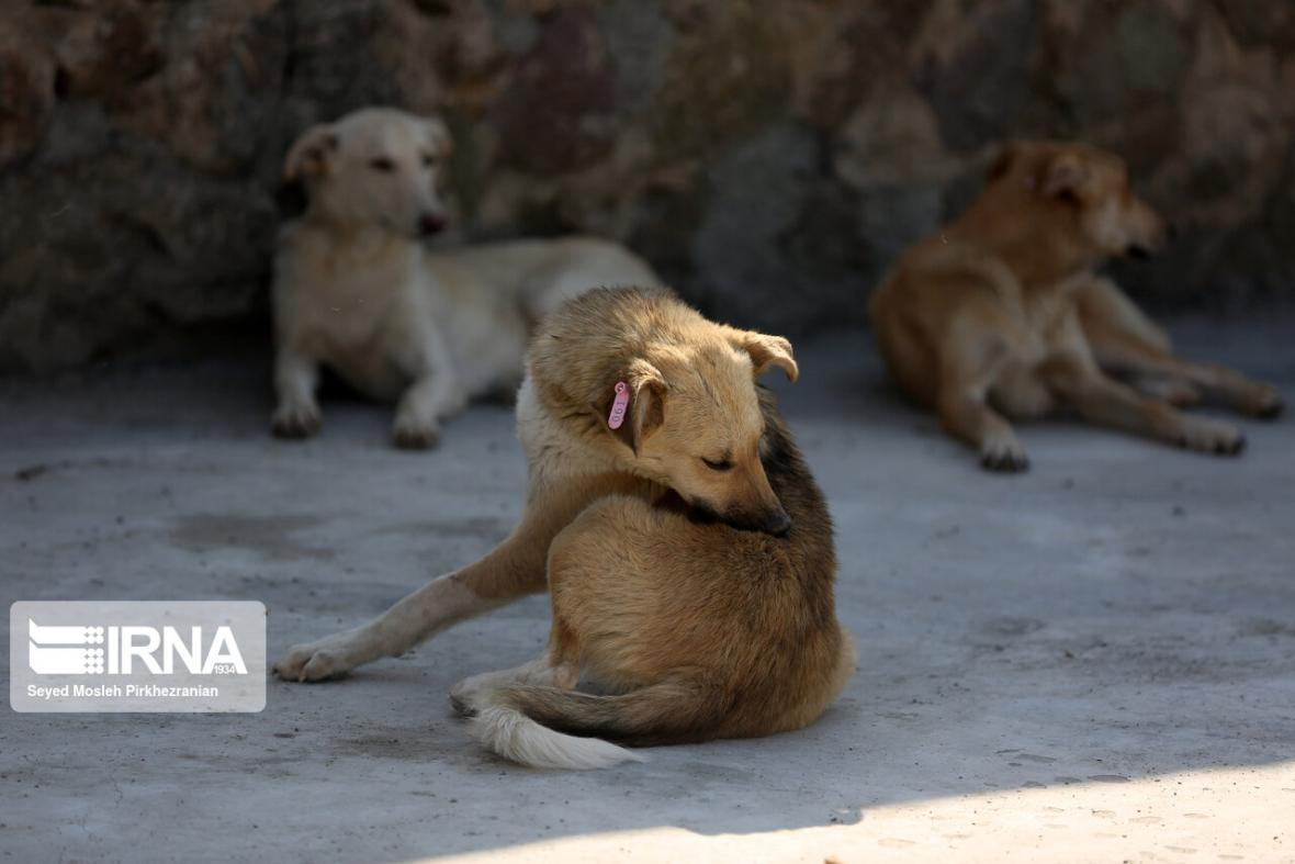 خبرنگاران 15 هزار قلاده سگ سالانه در استان اصفهان مایه کوبی می گردد