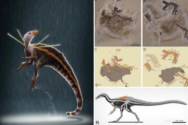 دانشمندان پیروز به کشف فسیل گونه جدیدی از دایناسور با ویژگی های ظاهری منحصر به فرد شدند