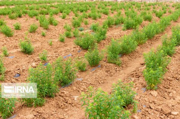 خبرنگاران 38 طرح منابع طبیعی در شهرستان بن در حال اجراست