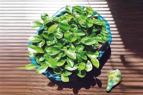 سبز سبزم ریشه دارم