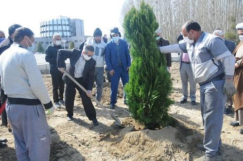 شروع کاشت 1500 درخت و گیاهان دارویی در دانشگاه ارومیه خبرنگاران